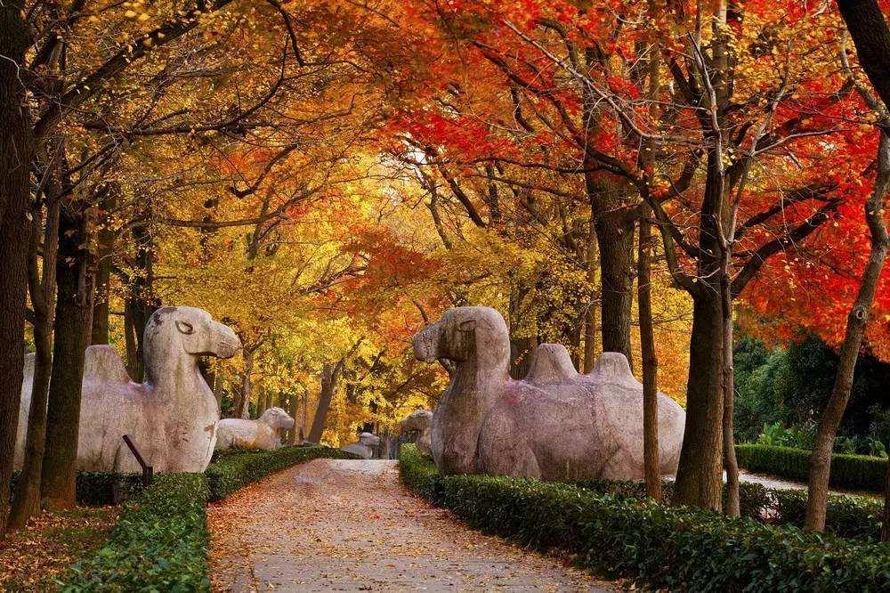 南京旅游十大必去景点
