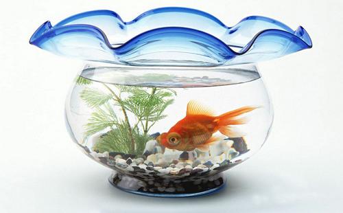 风水鱼是风水学中重要的招财风水